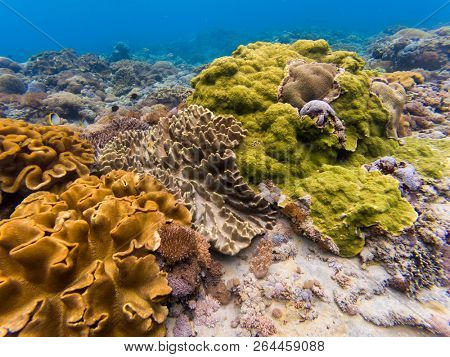 Underwater shot of hard coral reef in Penida island, Bali