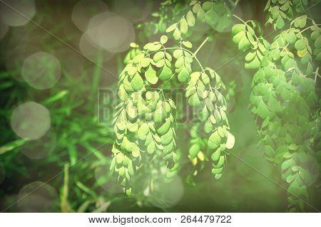 Vintage Filter  Horse Radish Tree