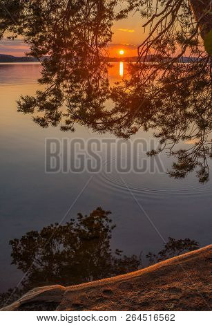 Colorful Sunset View Through Tree Branch In Finnish Shore
