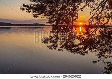 Colorful Sunset View Through Pine Tree Branch