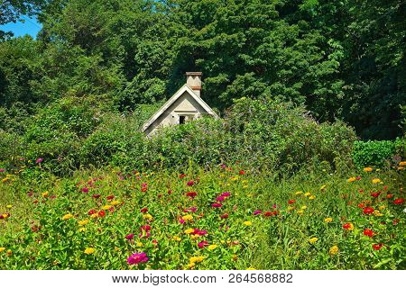 Bright Flowers In A Wild Patch In Front Of A Tiny Cottage In Upstate New York