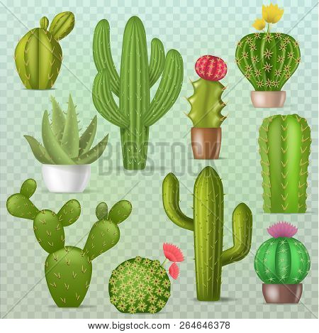 Cactus vector botanical cacti green cactaceous succulent plant botany illustration floral realistic set of cartoon exotic flowers isolated on transparent background poster