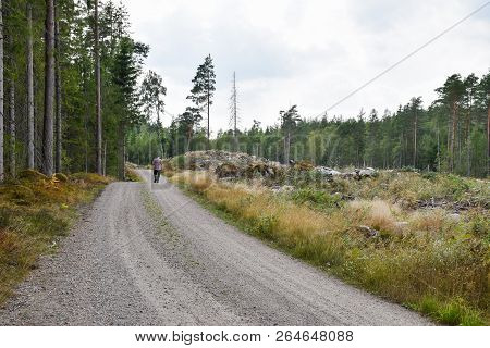Man Walks On A Gravel Road Through A Beautiful Coniferous Forest