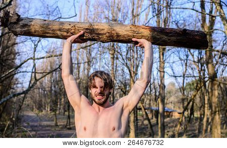 Alone In Woods. Man Beaded Brutal Sexy Lumberjack Carry Big Heavy Log. Man Brutal Strong Attractive