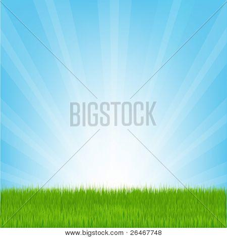 Field of Grass, Vector Illustration