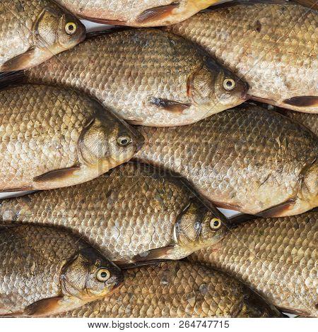 Raw Carp Fish. Fresh Fish Background. Crucian Carp.