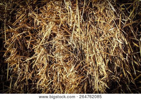 Hay Or Dry Grass Background. Hay Grass Texture Background. Straw, Dry Straw, Straw Background Textur