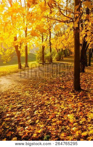 Autumn trees in sunny autumn park lit by bright sunshine - sunny autumn landscape in sunlight. Autumn park sunset landscape scene, autumn alley in sunlight