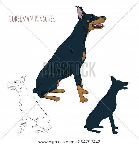 Doberman Pinscher Sitting Isolated On White Background. Silhouette Of Sitting Dog. Dobermann Sitting