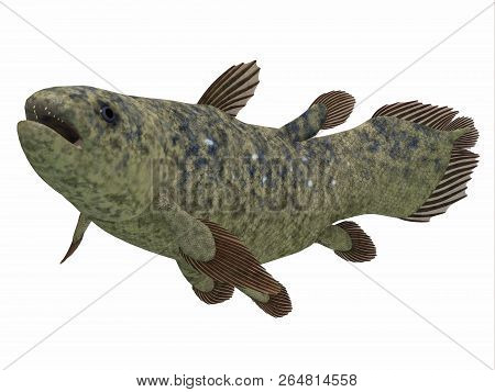 Coelacanth Fish Side Profile 3d Illustration - The Coelacanth Fish Was Thought To Be Extinct But Was