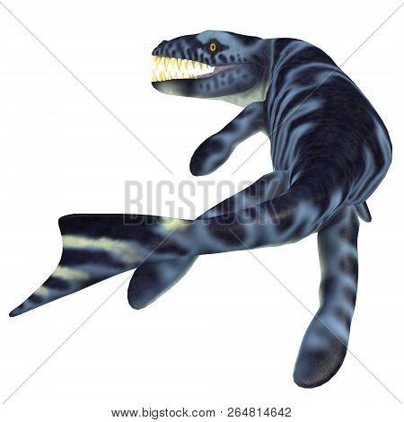 Dakosaurus Marine Reptile Tail 3d Illustration - Dakosaurus Was A Marine Carnivorous Reptile That Li