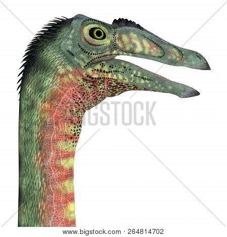 Deinocheirus Dinosaur Head 3d Illustration - Deinocheirus Was A Carnivorous Theropod Dinosaur That L