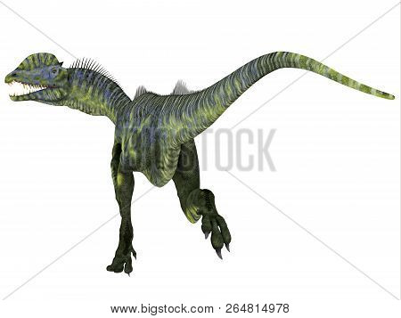 Dilophosaurus Dinosaur Tail 3d Illustration - Dilophosaurus Was A Large Carnivorous Theropod Dinosau