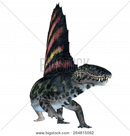 Dimetrodon Reptile On White 3d Illustration - Dimetrodon Was A Sail-back Carnivorous Dinosaur That L
