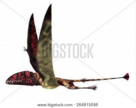 Dimorphodon Reptile Side Profile 3d Illustration - Dimorphodon Was A Carnivorous Pterosaur Reptile T
