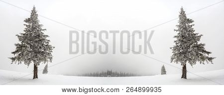Black And White Winter Mountain New Year Christmas Landscape. Isolated Alone Tall Fir-tree Covered W