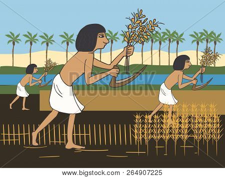 Ancient Egyptian Peasants Harvest On The Nile Bank, Colorful Vector Cartoon Illustration Of First Fa