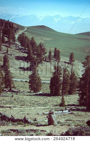 View Of The White Mountains In Inyo National Forest In The Ancient Bristlecone Pine Forest