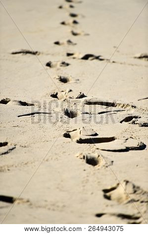 Man Footprints In The Sand On A Beach