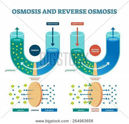 Osmosis Reverse Vector Illustration. Explained Process With Water Example. Pressure, Flow And Pure W
