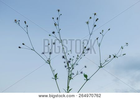 Small tree with small wilted flowers on the background of a clear sky, a clear blue sky with no clouds poster
