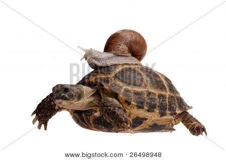 Snail On The Turtle