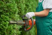 Close up of man hand with hedge trimmer cutting bushes of white cedar to ideal fence. Male gardener, wearing in overalls with protective glove working with professional garden equipment in backyard. poster