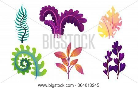 Abstract Plants With Fancy Shapes And Colors Vector Set