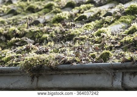 Dirty Roof With Dense Moss And Gutter With Leaves And Moss, Requiring Cleaning
