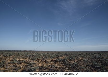 Steppe Landscape. Small Green Vegetation On Hot Sand.