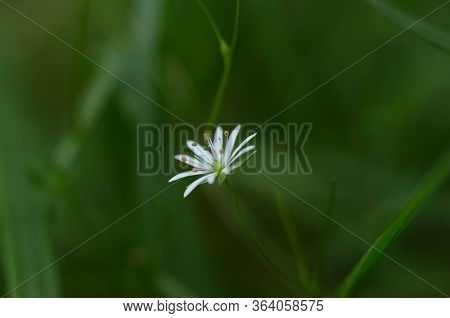 A White Flower On A Green Grass