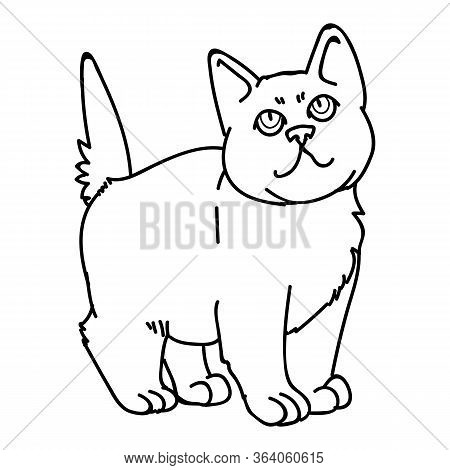 Cute Monochrome Lineart British Shorthair Kitten Vector Clipart. Pedigree Kitty Breed For Cat Lovers