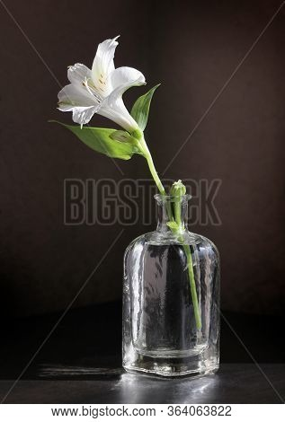 Alstroemeria Flower In The Small Vintage Bottle Against A Low Key Background. Selective And Soft Foc