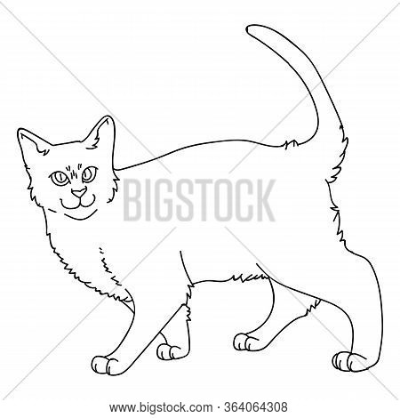 Cute Cartoon Monochrome Bombay Cat Lineart Vector Clipart. Pedigree Kitty Breed For Cat Lovers. Pure