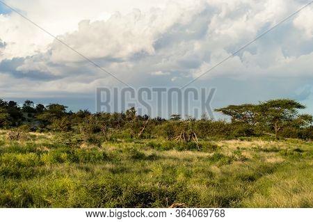 View Of The Trails And Savannah Of Samburu Park In Central Kenya