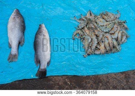 Bhetki Or Barramundi (lates Calcarifer) Or Asian Sea Bass, Is A Popular Fish Among Bengali People. P