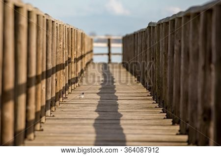 Wooden Deck Constructed For Water Transportation And Birdwatching At The Protected Areas Of Lake Vis