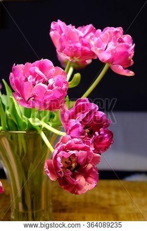Rosa Tulpen Sind Schöne Blumen Verwelkt Lassen Blüte Hängen
