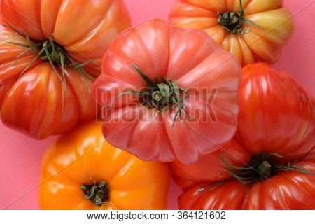 Bright And Colorful Heirloom Tomatoes Against Bright Pink Background.