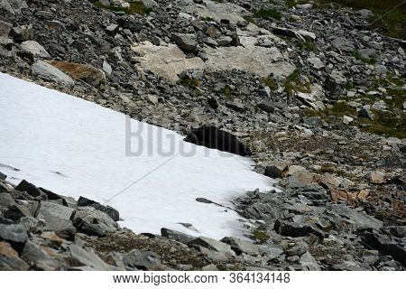 Black Bear Rests On Cold Snowfield On A Warm Summer Day In Mountains
