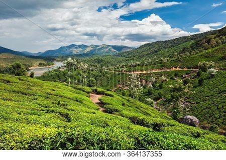 Evergreen tea plantations of indian tea, Munnar, Kerala, South India