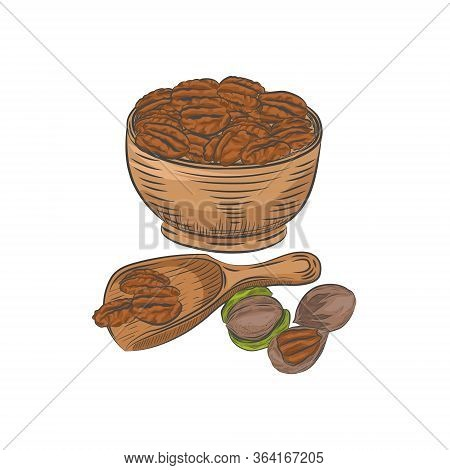 Pecan In Bowl And Scoop Vector Sketch. Pecan Kernels And Nutshells Isolated On White Background.
