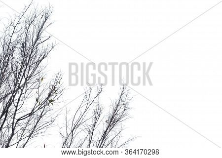 Blurred Leafless Trees With Branches On White Isolated Background With Copy Space