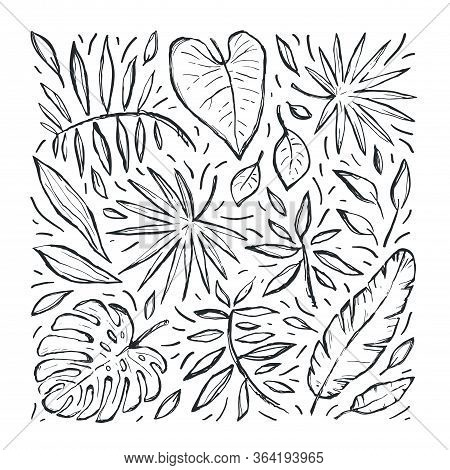 Tropical Hand Drawn Vector Sketch Set With Leaves. Abstract Exotic Stylized Plant Drawing. Black Lin