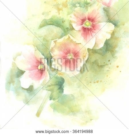 Mallow Pink Flowers; Hand Paint Watercolor Illustration, Template For Greeting Card, Banner.