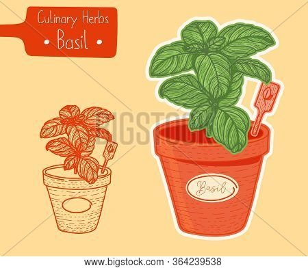 Food And Culinary Herb Basil Growing In A Pot, Hand-draw Sketch Illustration