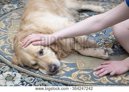 A Sick Dog Is Lying On The Carpet. Treatment Of Dogs At Home