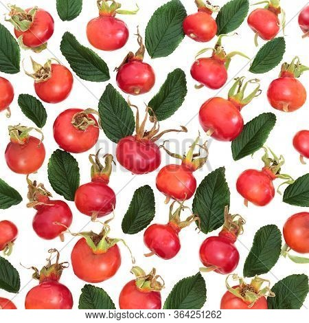 Rosehip berry fruit immune boosting food forming an abstract background. Very high in vitamin c, lycopene, anthocyanins & antioxidants. Rosa Rugosa.