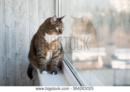 Cat Sitting On The Window Sill. Tabby Cat Looking At The Window
