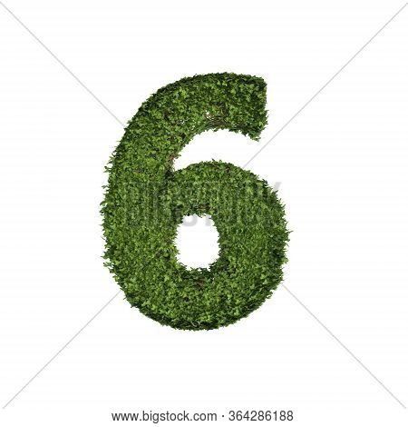 Ivy Plant With Leaves, Green Creeper Bush And Vines Forming Number Six, 6, Alphabet Text Font Charac